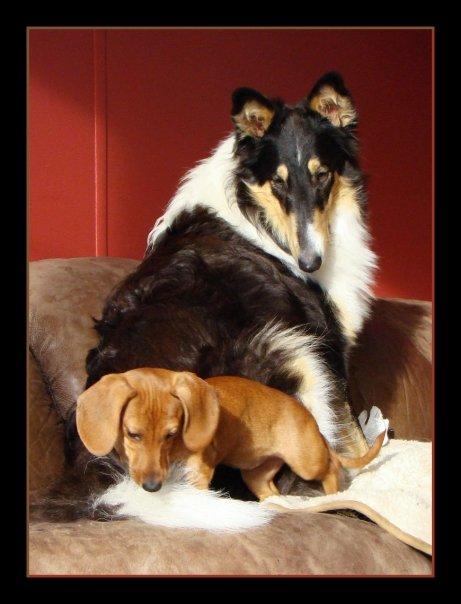Sadie & Sam