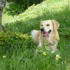 saetta il cane più fortunato del mondo