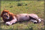 SAFARI au KENYA - 13 -