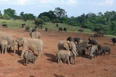 Safari Impression: Die Mischung macht's