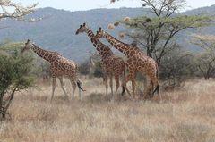 Safari Impression: Familienausflug