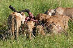 Safari Impression: Familienmahl