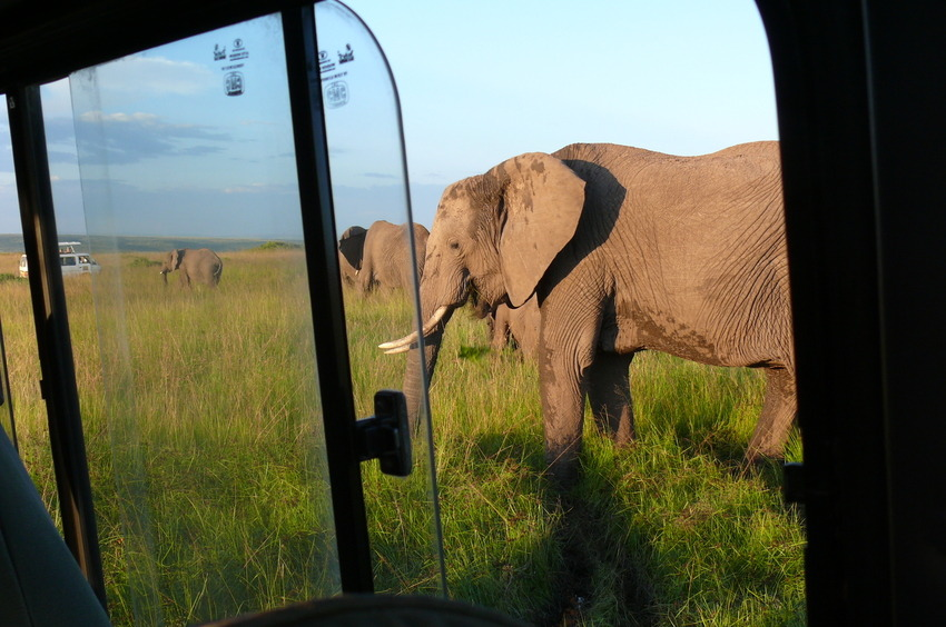 Safari Impression: Hautnahes Erlebnis