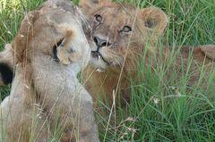 Safari Impression: Ich hab Dich lieb