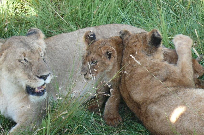 Safari Impression: Mama, wir haben Dich lieb