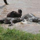 Safari Impression: Spaßbad