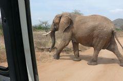 Safari Impression: Zum Gleifen nah