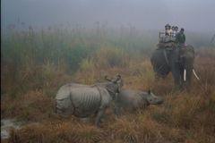 safari photo à l aube, nepal