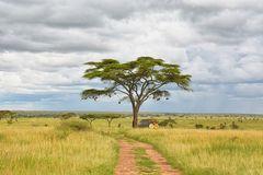 Safari Stimmung
