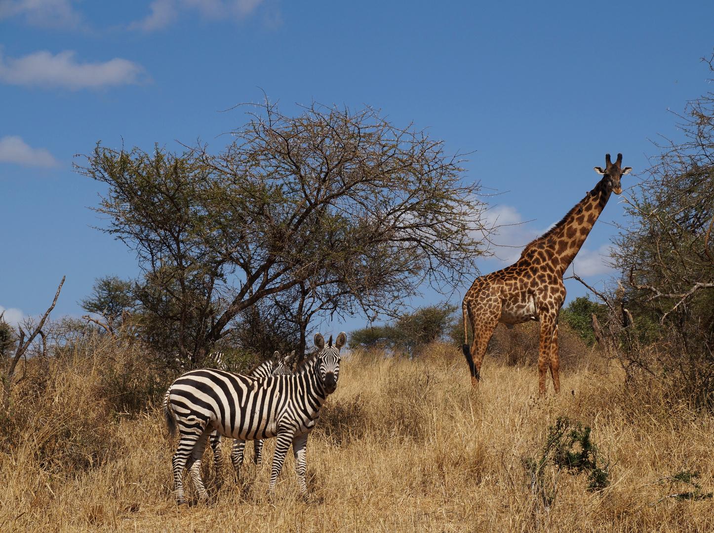 Safari Tsavo Ost (Kenia)