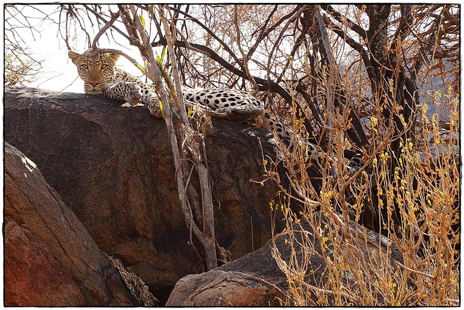 Safari Tsavo West (Kenia)