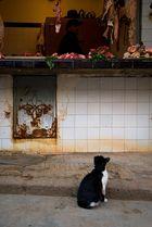 Safi, gatto curioso... - Safì, a curious cat