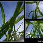 saftiges gras