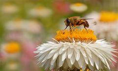 ... sag mal du kleine Maus, wollen wir heute Abend zum Honigwirten tanzen gehen?