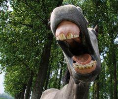 Sag mal, hab ich da was Grünes zwischen den Zähnen???