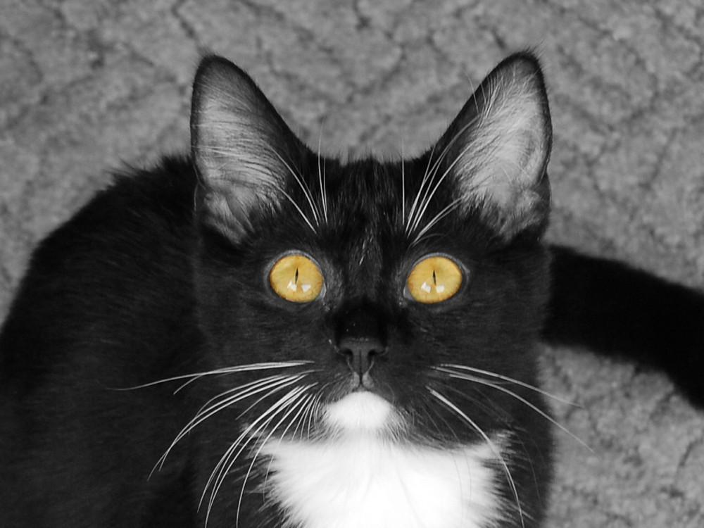 Sag, warum hast Du so große Augen?