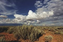 Sagebrush & Clouds