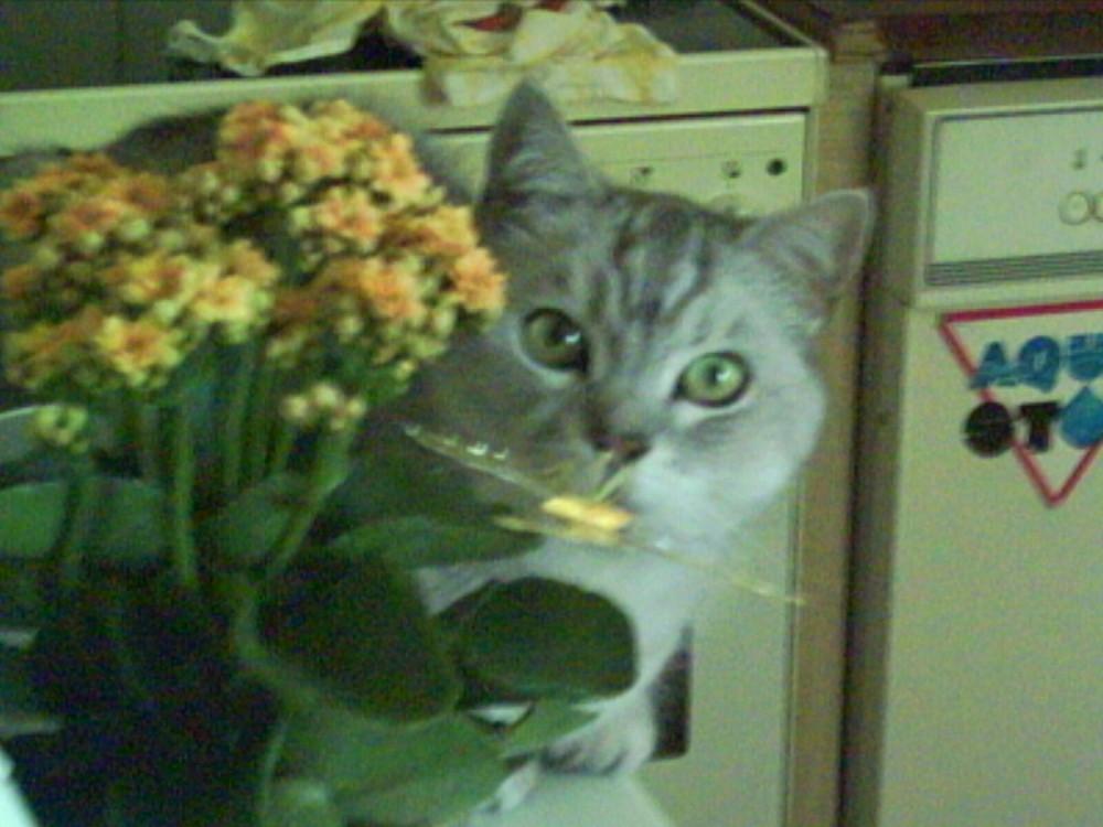 Sag's mir durch die Blume .....