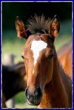 Sagt die Fliege zum Pferd....wow...steile Frisur heute!!!