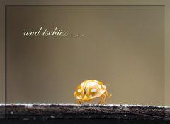 ...sagte der kleine Käfer im Herbst,