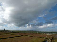 Sailzwiesen auf der Hallig Südfall