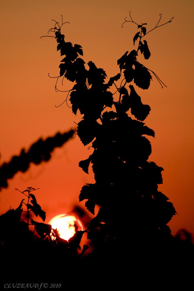 Saint Laurent des vignes