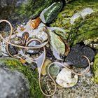 Saitenwurm, Wasserkalb (Nematomorpha) - Comme un mini-serpent dans l'eau!