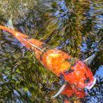 Sakana to ki - Der Fisch in den Bäumen