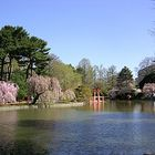Sakura Matsuri 2006 Brooklyn Botanic Garden