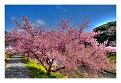 Sakura Sakura-4