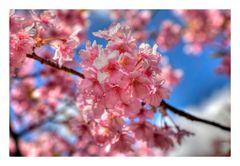 Sakura Sakura-7