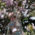Sakuraherbst