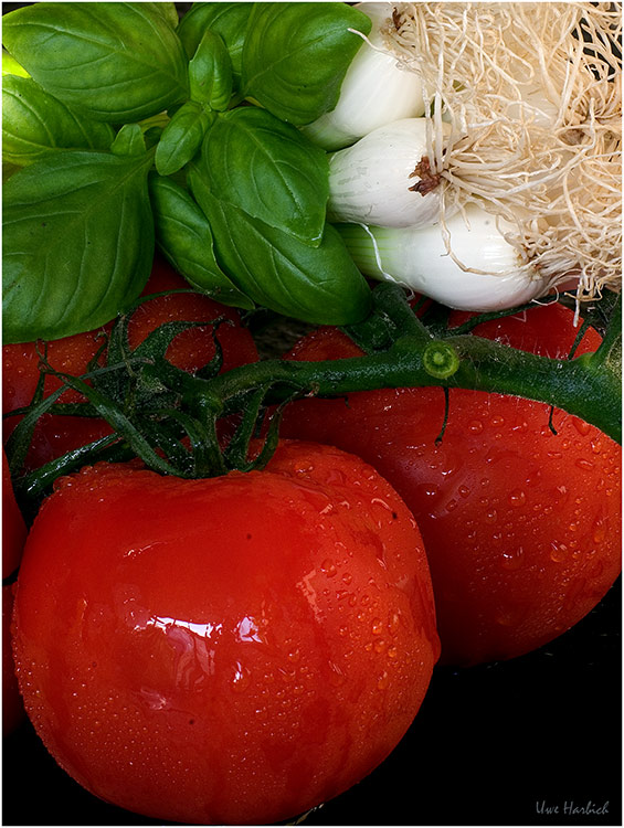 Salat in der Vorstufe
