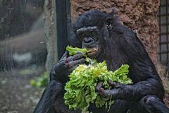 Salat ist gesund..