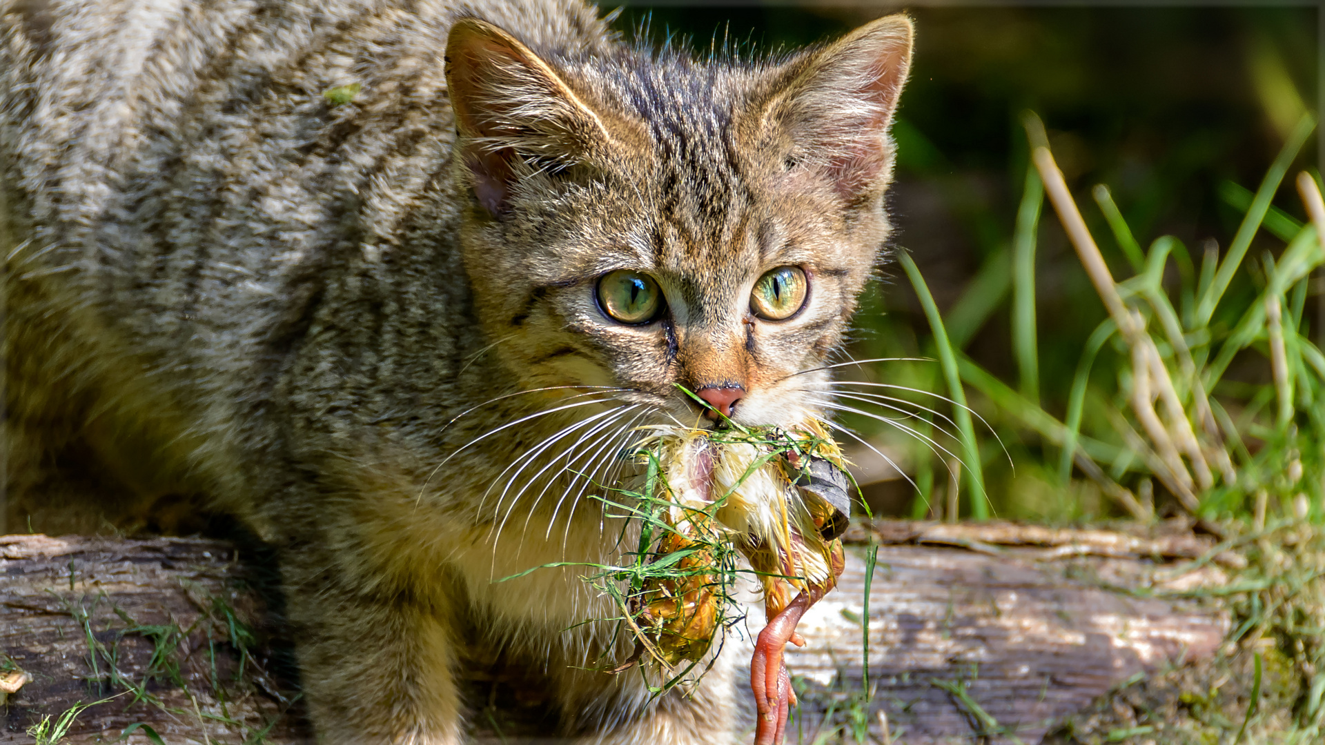 Salat mit Geflügel