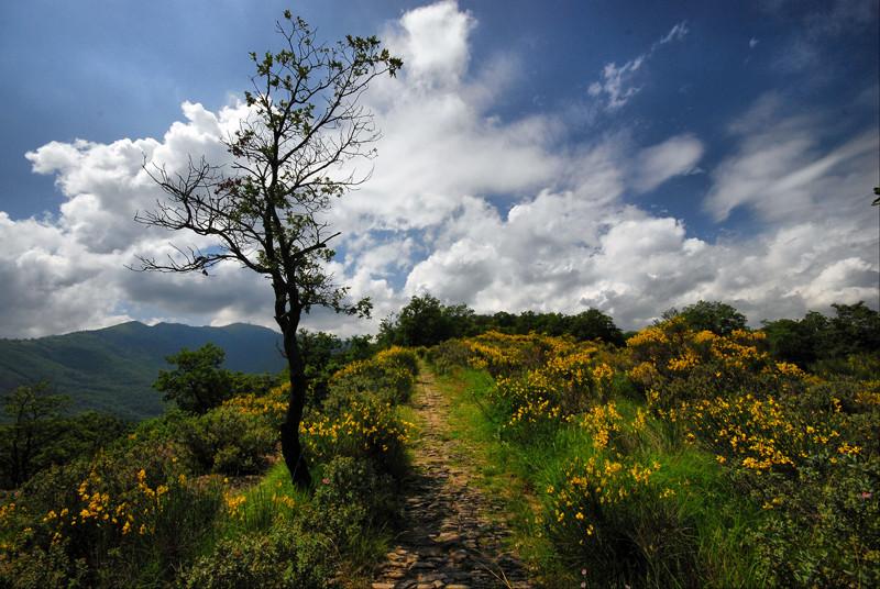 Salendo al Monte Faudo (IM)