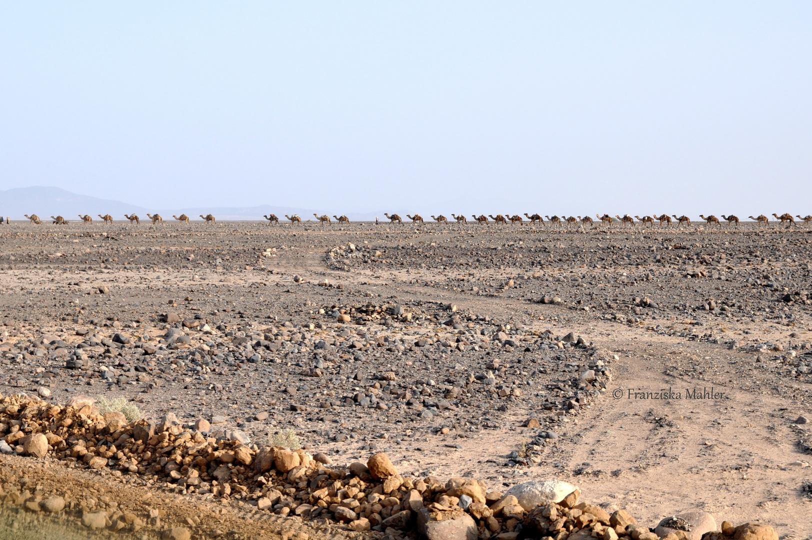 Salt caravans of Danakil