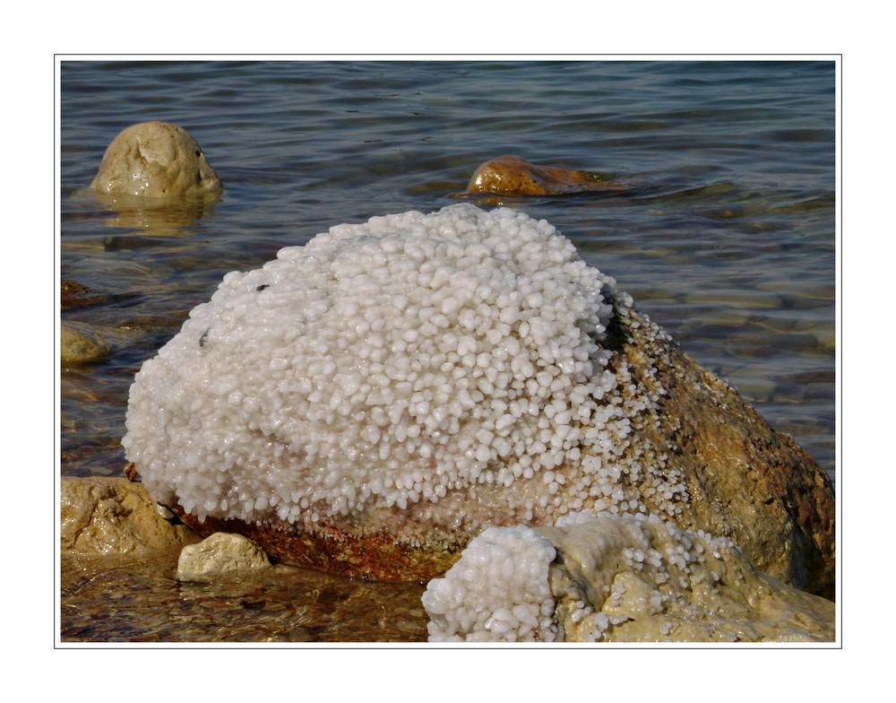 Salt............        Dead sea II.