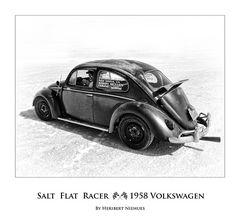 Salt Flat Bug