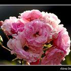 Saludando a la primavera