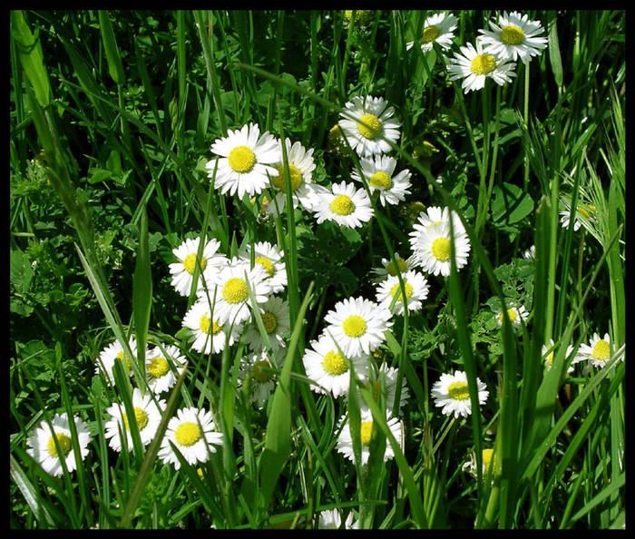 Saluti di primavera