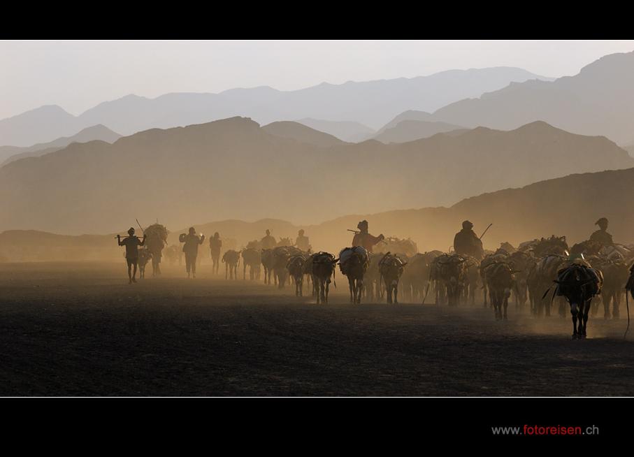 Salzkarawane in der Wüste Danakil