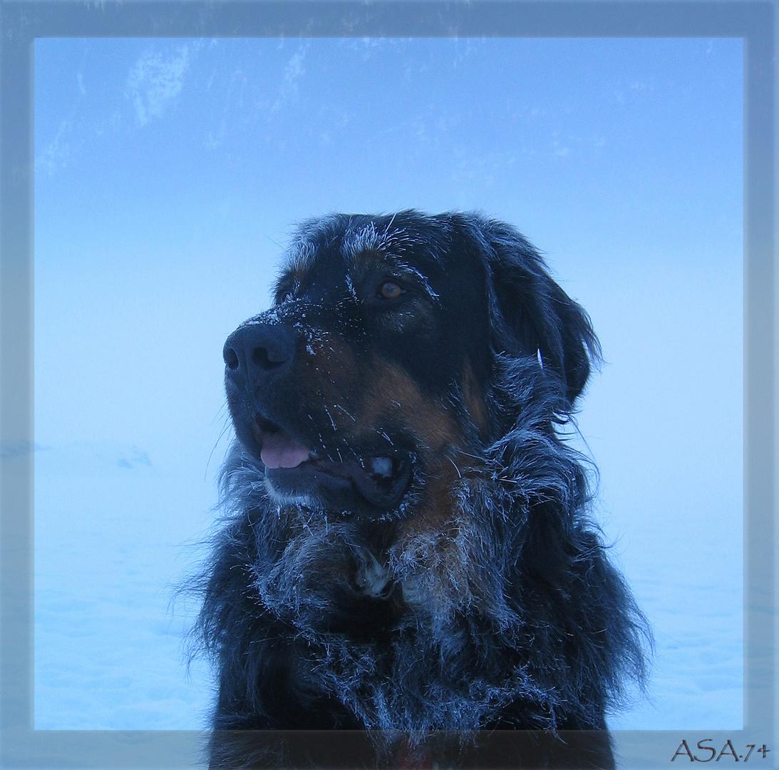 Sam bei Winterspatziergang