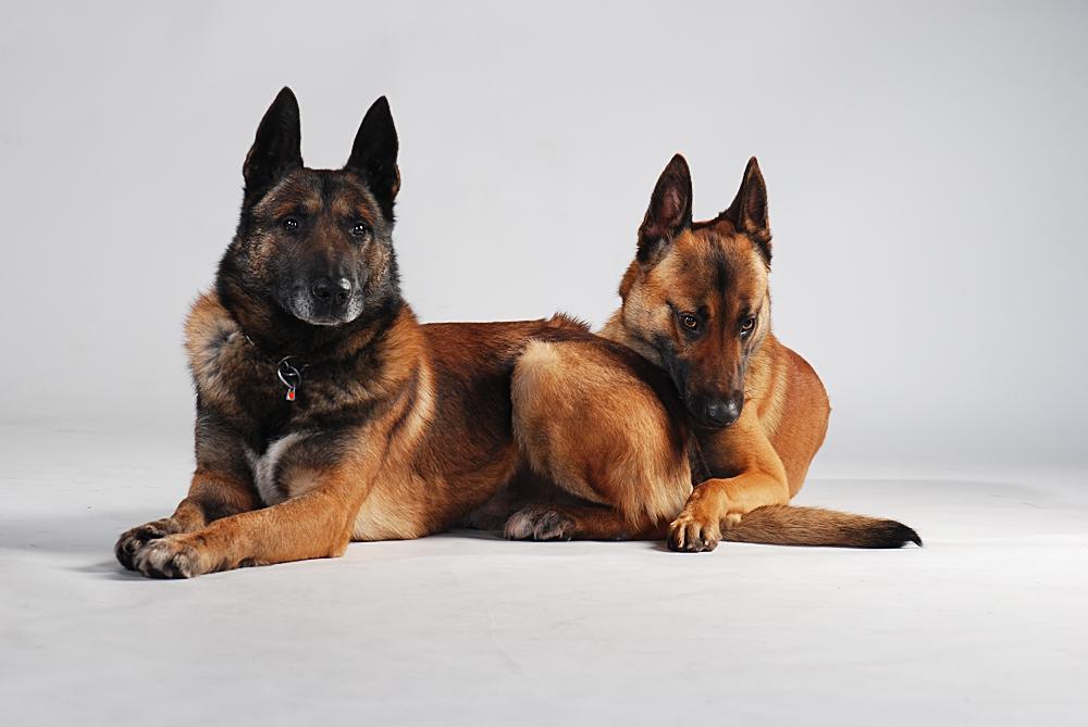 Sam und Miko