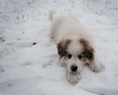Samantha im Schnee (2)