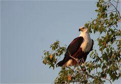 Sambias National - Tier