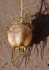 Samenspender für`s nächste Frühjahr