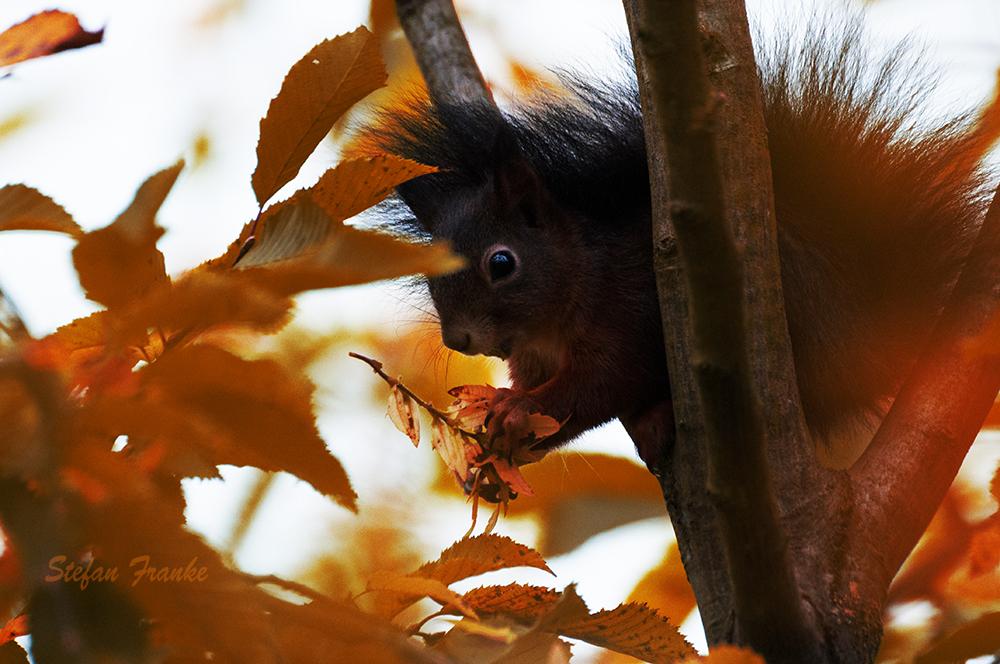 Sammelfieber der Tiere in der Herbstzeit ..........