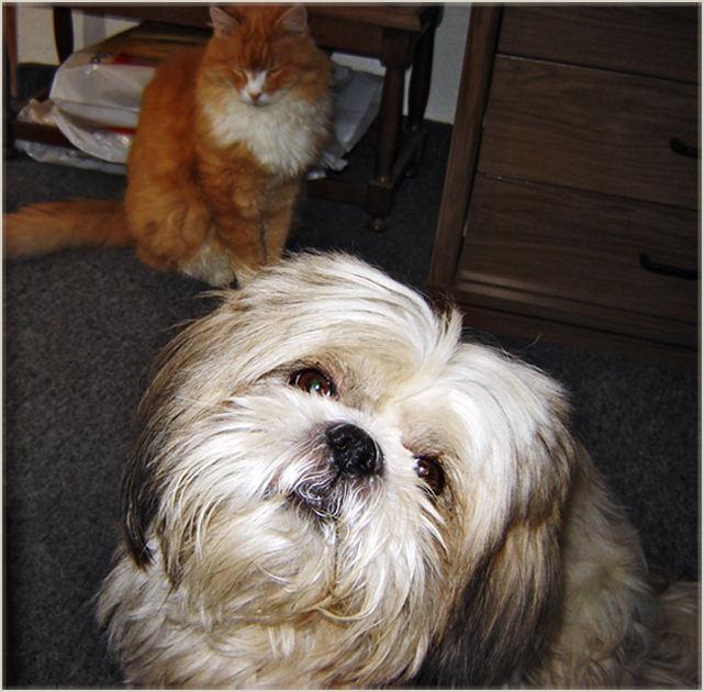 Sammy and Espen for visit 2