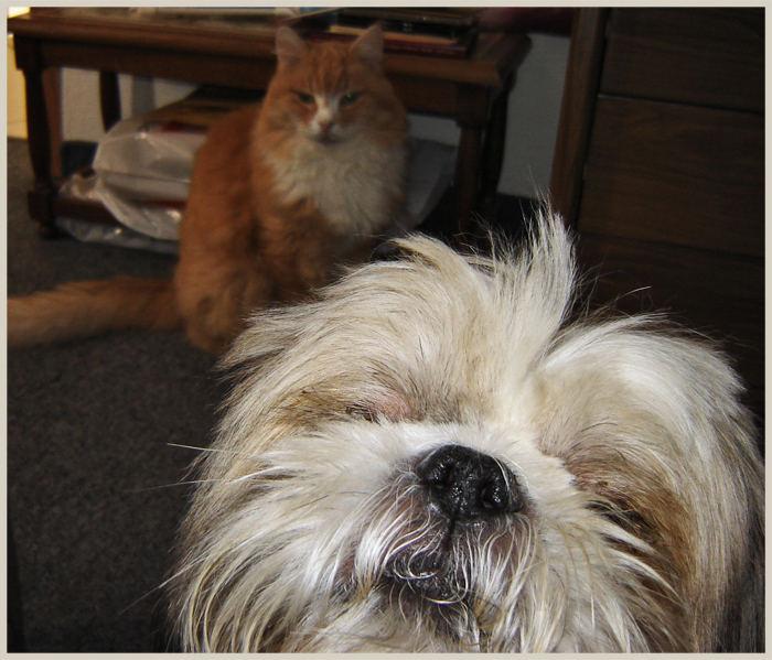 Sammy and Espen for visit